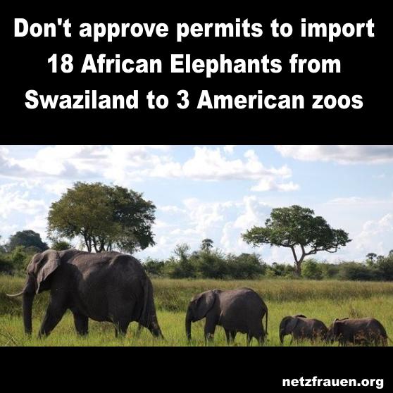 elefanten8