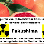 Fukushima: Spuren von radioaktivem Caesium-137 in Floridas Zitrusfrüchten-Trace levels of radioactive cesium-137 from Fukushima now being detected in Florida citrus fruits