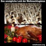 Das unsägliche Leid der Weihnachtsgänse - Steuergelder für billiges Geflügelfleisch aus Polen, denn Polen ist billig - Tierquälerei und Keime incl.