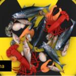 Höchste Strahlung seit der Havarie – Essen Sie unbewusst Produkte aus Fukushima? Größter Convenience Store in Japan jetzt mit Gemüse und Schweinefleisch aus Fukushima – Taiwan protestiert gegen Aufhebung von Importverbot