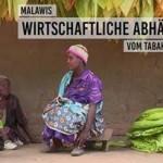 Zementieren Entwicklungsgelder Malawis Tabak-Problem? Entwicklungsgeld für blauen Dunst?