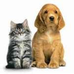 Nestlé, Mars, Fressnapf – Das Geschäft mit Haustieren kennt keine Grenzen