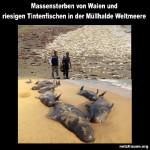 Massensterben von Walen und riesigen Tintenfischen in der Müllhalde Weltmeere