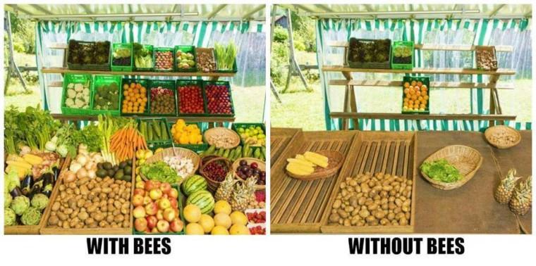 Bienen 0