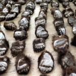 Hohe Haftstrafen für mehrere Restaurantbesitzer in China wegen Handel mit Pangolins und Bärentatzen