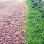 Das darf doch nicht wahr sein: Die Agrarlobby freut sich und sägt am Ast, auf dem wir alle sitzen – BfR: Keine neuen Erkenntnisse bei der Risikobewertung von Glyphosat – GMOs, Glyphosate and Soil Biology
