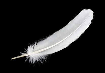 close-up big white feather, isolated on black