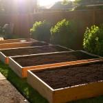 Umgestaltung vom Rasen zum Garten in 6 einfachen Schritten - LAWN TO GARDEN IN A SINGLE WEEKEND