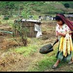 Staatliche Erpressung zugunsten Monsanto – Trotz Bedingung für DR-CAFTA – Monsanto-Gesetz in Guatemala aufgehoben und El Salvador wirft Monsanto mitsamt Saatgut aus dem Land
