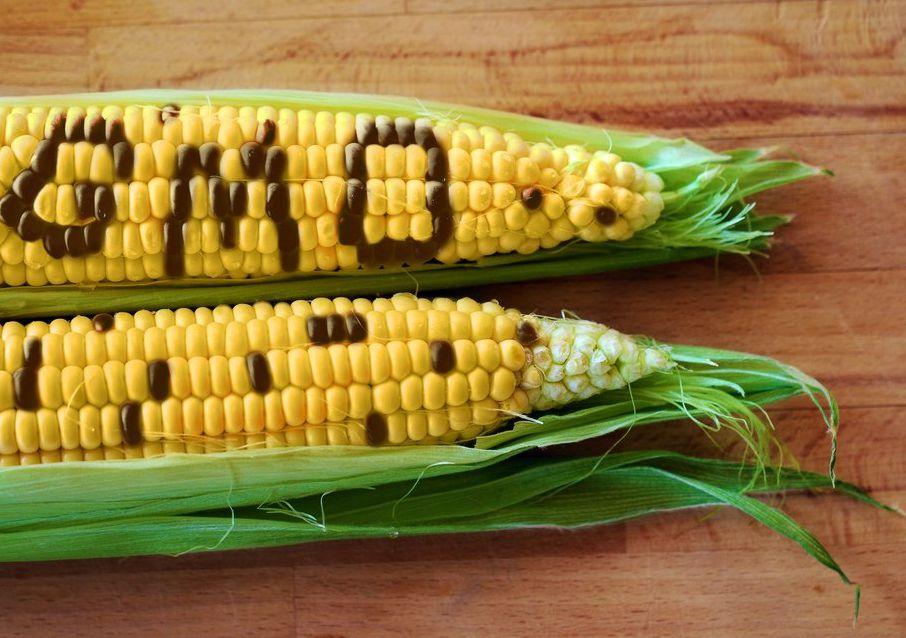 GMO77