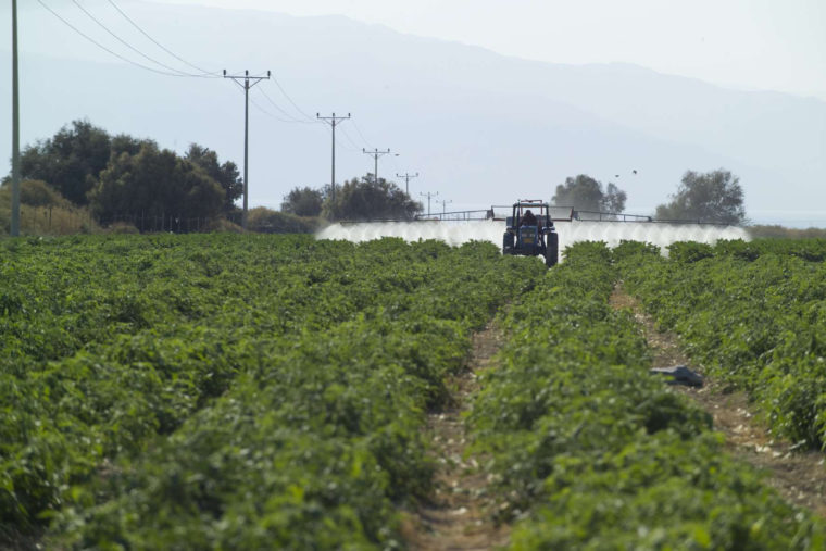 Naher Osten Landwirtschaft in einem Israelischen Gebiet im Westjordanland, Einsatz von Insektiziden Arbeiten im Rahmen des SMART-Projekts (S.M.A.R.T.)