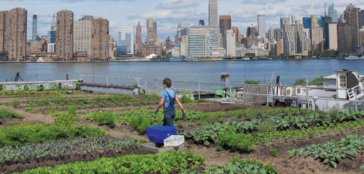 new york eine stadt macht satt urban farming hei t der trend der ganz new york erfasst. Black Bedroom Furniture Sets. Home Design Ideas