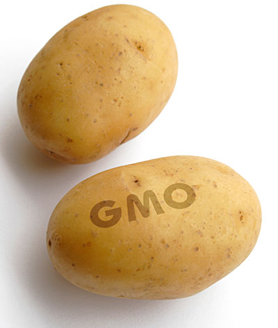 gmo-potatoes