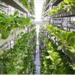 Mehr mit weniger! Die vertikale Revolution: Agrarwolkenkratzer lösen Hungerproblem