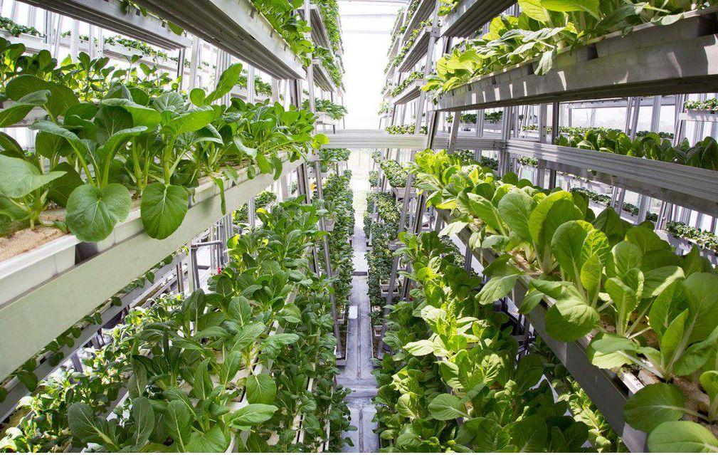 Mehr mit weniger! Die vertikale Revolution: Agrarwolkenkratzer ...