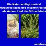 Die Natur schlägt zurück! Unkrautresistenz und Insektenresistenz als Antwort auf die Giftcocktails