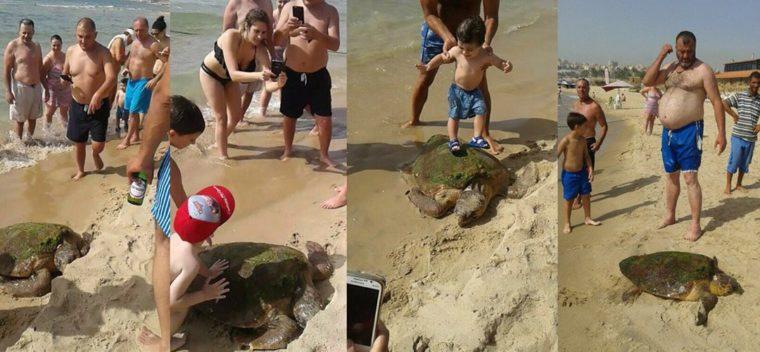 selfie-turtle (1)