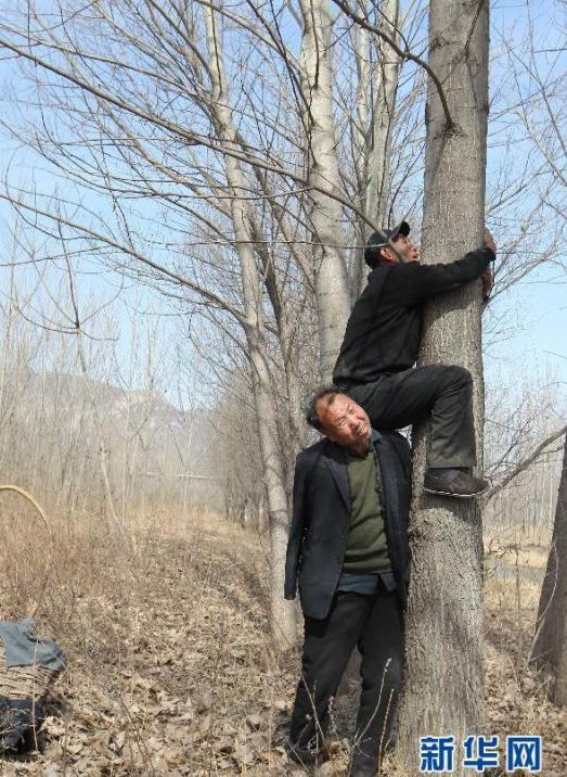 Bäume5