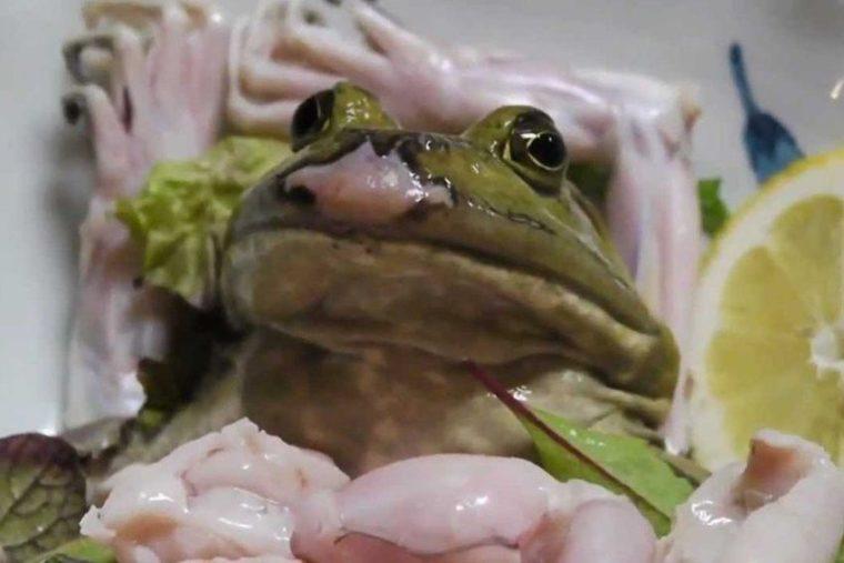 Frosch9