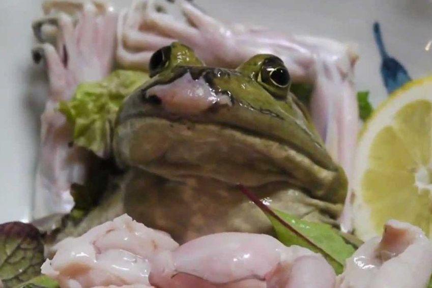 Frosch Lebendig Essen