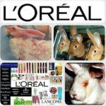 Tierversuche – nicht nur die hässliche Seite der Schönheit – sondern auch Deutsche Krebshilfe, Deutsche Herzstiftung und Herz-Lungen-Stiftung finanzieren Tierversuche