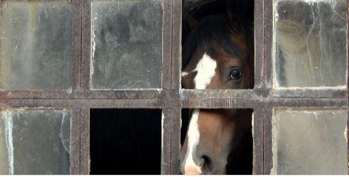Pferder
