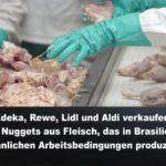 Edeka, Rewe, Lidl und Aldi verkaufen Chicken Nuggets aus Fleisch, das in Brasilien unter sklavenähnlichen Arbeitsbedingungen produziert wird