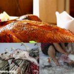 Steuergelder für billiges Geflügelfleisch aus Polen – dem Fleisch zieht man seine Herkunft und Qualen nicht an
