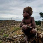 In nur einem Jahrzehnt zerstörten Konzerne 50 Millionen Hektar Wald! - IN JUST ONE DECADE, CORPORATIONS DESTROYED 50 MILLION HECTARES OF FOREST