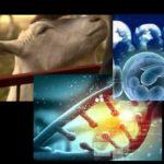 Genforschung wird immer skurriler – Was mit einer Ziege Ende der 90er begann, wird weiter perfektioniert – sogar vor menschlichen Embryonen wird nicht halt gemacht!