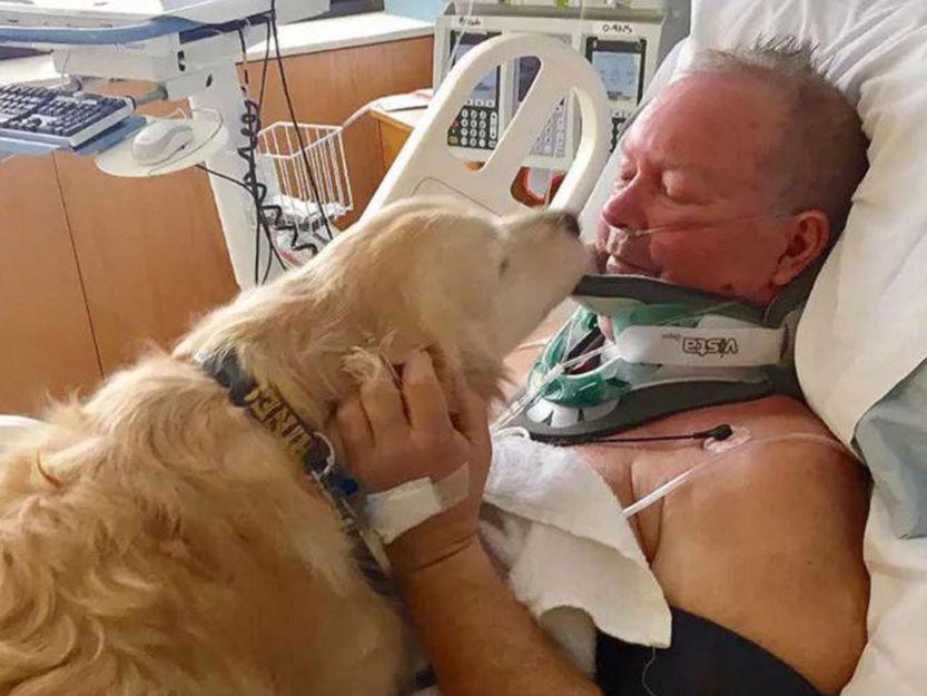 Treuer Hund Rettet Verletztes Herrchen Vor Dem Erfrieren Faithful