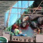 Grausam - die blutige Bucht Taiji in Japan! Delphine werden brutal abgeschlachtet - das Wasser ist blutrot gefärbt - The Horrific Truth About Taiji Cove Hunt: Japan's cruel dolphin hunt