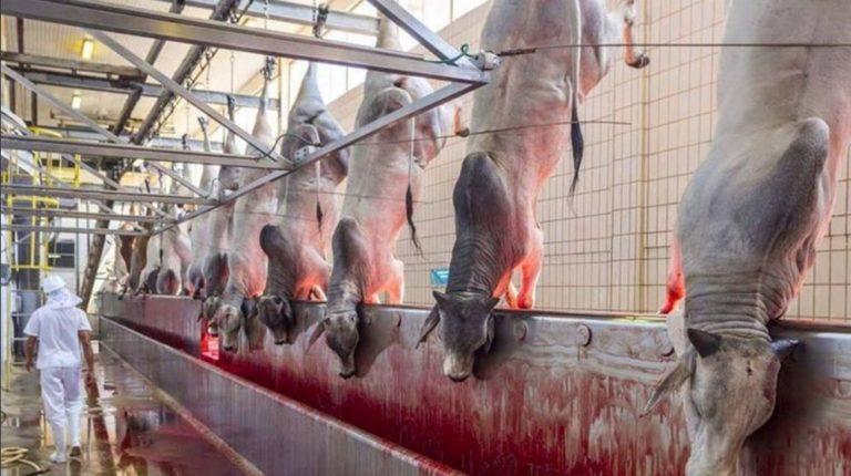 Verrückter geht es nicht mehr! EU will mit 15 Mio. Euro Fleischverzehr ankurbeln - Eier aus Ukraine und Argentinien - Geflügel aus Brasilien und Thailand und demnächst Hormonfleisch aus den USA