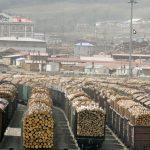 Klopapier aus Sibirischem Holz