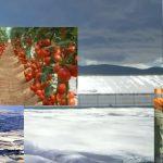 Gemüse aus dem Plastikgarten Europas - Ausbeutung, Lohndumping, Sklaverei, Pestizide, Genmanipulation
