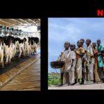 Entwicklungshilfe als Mogelpackung sorgt für Hunger in Afrika – In Afrikas Kühlregalen stehen europäische Milchprodukte zu Billigpreisen