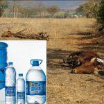 Trotz Dürre-Katastrophe – Nestlé pumpt 50.000 Liter pro Stunde Wasser aus Äthiopiens Boden und baut die Milchwirtschaft aus