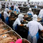 """Weil es so billig ist - Thailand  """"Kitchen of the World"""" für Europa - Sklavenarbeit und Genmanipulation incl."""