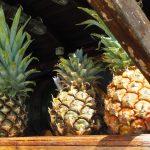 Ananas - mit schlimmen Nebenwirkungen