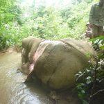 Schreckliche Entdeckungen! Der illegale Handel mit asiatischen Elefantenhäuten - für Schmuck und traditionelle Medizin - hat sich in ganz Südostasien ausgeweitet - Elephant skin sales rapidly mounting