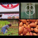 Mit Kartoffelchips gegen den Hunger in Afrika? - Konzerne als Retter in der Entwicklungspolitik? - Das Geschäft mit der Entwicklungshilfe
