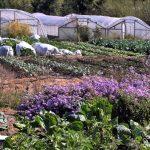 Der mit der Dürre tanzt - Das wird BayerMonsanto nicht gefallen - ein kalifornischer Landwirt hat wohl die wirksamste Methode gefunden, Nutzpflanzen in Dürregebieten anzubauen! The Drought Fighter