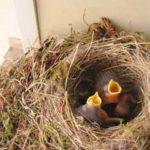 Das Ende der Artenvielfalt – Die hungrigen Vögel!