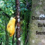 Global Top 25 Candy Industry! Chocolate's Dark Secret - Dunkles Geheimnis von Schokolade - Zerstörung von Nationalparks