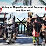 TOPP Mexiko - Sieg für Maya-Bauern und Imker über Monsanto - Monsanto lose Mexican GMO license! Victory for Mayan Farmers and Beekeepers over biotech giant Monsanto