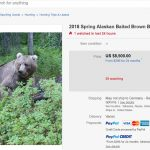 "Trophäenjagd – Das ""blutige Vergnügen"" auf  Ebay- sogar Bärenjagd und Trophäenjagd nach Afrika angeboten! – Trophy Hunting on eBay!"