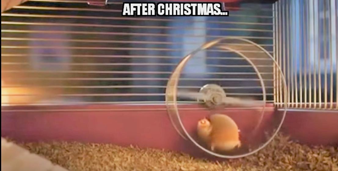 Bilder Nach Weihnachten.Wie Tiere Nach Weihnachten Aussehen What Animals Look Like After