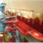 ci-romero deckt auf: Erneut Arbeitsrechtsverletzungen bei der Herstellung von EDEKAs Chicken Nuggets - Fleisch aus Brasilien!