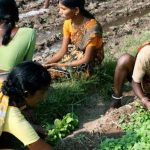 Indien macht es vor - Ökologischer Landbau statt BayerMonsanto! - INDIA: Organic farming instead of Bayer Monsanto!