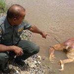 Warum? Orang Utan brutal misshandelt, enthauptet, mit 17 Kugeln getötet und einfach in den Fluss geworfen!